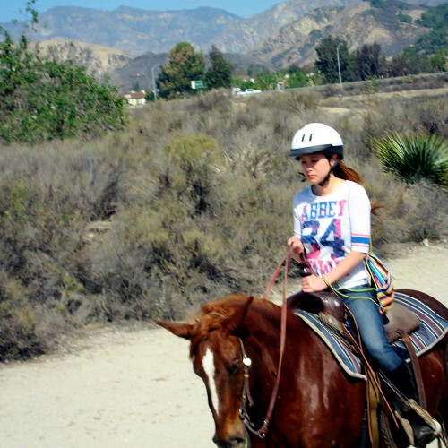 Polo | Horseback Riding