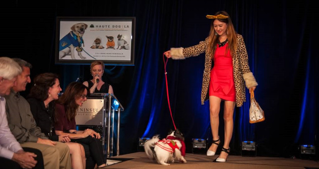 Cutest Fashion...Haute Dog Runway Show